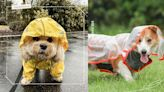 梅雨季來報到!推薦6款時尚又實用的「狗狗雨衣」,反光+撞色設計超多款式可以選擇! | 寵物 | 妞新聞 niusnews
