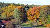 Must see fall foliage trips around Massachusetts, according to AAA