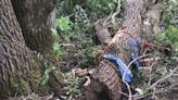 59歲男砍樹被壓!4天後奇蹟生還 真實身分成救命關鍵