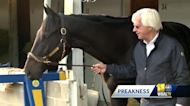 Will Medina Spirit race in the 146th Preakness Stakes?