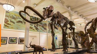 Mammoth skeletons found near Mexico City