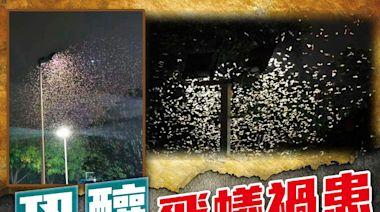 陸台飛蟻結隊「橫行」 專家籲黃昏後鎖緊門窗