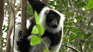 Madagascar's lemurs take a breather as tourism struggles