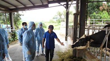 捍衛牛隻安全 台東完成全縣近3千頭牛結節疹疫苗施打