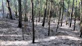 Cariló. Lograron controlar el incendio de más de 15 hectáreas de la reserva forestal
