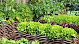 The Best Vegetables and Flowers to Plant in September