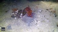 Underwater Photographer Captures Octopus Disappearing Beneath Sand