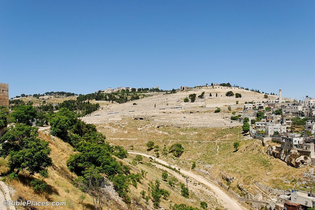 Mount of Olives 259x100 Mount of Olives