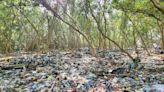 黑面琵鷺等瀕危候鳥吃塑膠!馬尼拉灣沿岸濕地堆滿垃圾,紅樹林恐「窒息」