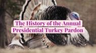The History of the Annual Presidential Turkey Pardon