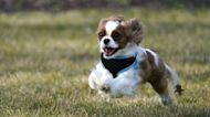 Early Results Of Dog Longevity Treatment Show Promise