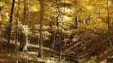Warbler Ridge in rural Charleston to host fall festival, guided walks