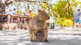 Enjoy them while you can? The ecotourism challenge facing Australia's favorite islands