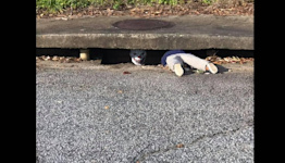 911 call about toddler stuck in storm drain leads cops to odd Halloween prank in SC