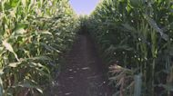 Colorado Family Tradition, Maize In The City, Opens For A New Year