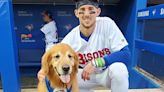 MLB/黃金獵犬衝上投手丘 狗球僮「菜鳥」意外爆紅