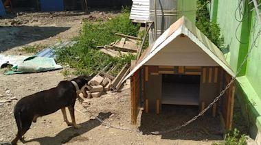 不忍鄰居汪風吹雨淋! 暖木工DIY「拼接風豪宅」:盼它能照顧你