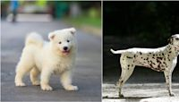 It's official! These are the 20 cutest dog breeds in the world