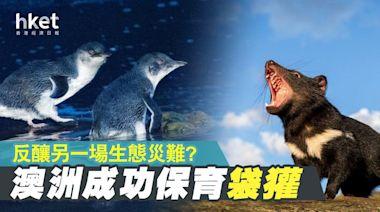 澳洲成功保育袋獾 反釀另一場生態災難? - 香港經濟日報 - 即時新聞頻道 - 國際形勢 - 環球社會熱點