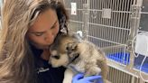 Story from EVIT: Veterinarian got her start at East Valley Institute of Technology