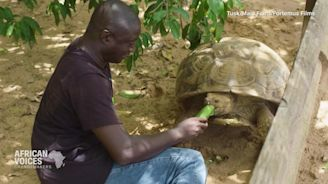 This man is saving the African turtle - CNN Video