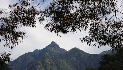 雙十連假來趟森林之旅!八仙山森林豐盛季開跑