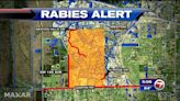 Rabies alert issued for Weston after fox tests positive
