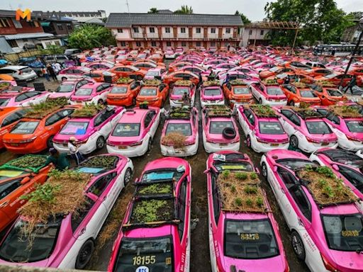 300多輛出租車「車頂變菜園」!司機無奈變農夫:快活不下去