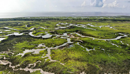 'There's going to be no fishing.' Can Mississippi marshes be saved from sea level rise?