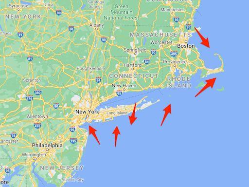Great white sharks are swimming near New York beaches, tracker says