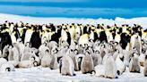 講義書摘:看企鵝的日子