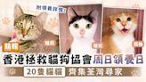 周日好去處︳香港拯救貓狗協會周日領養日 20隻貓貓齊集荃灣尋家 - 晴報 - 副刊 - 生活副刊