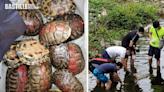 復活清明長假期拯救40隻放生烏龜 棄龜關注組嘆疲於奔命 | 社會事