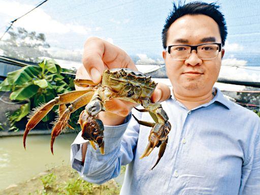 【新聞追擊】廢魚塘引高科技 養殖港產大閘蟹