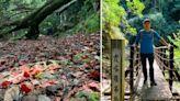 謝金河:霞喀羅步道的楓紅層層 - 財訊雙週刊