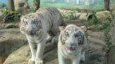 六福村動物園Online 動物明星狂賣萌、保育員轉當網紅
