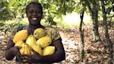 Ghana's farmers eye sweet success from chocolate