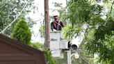 Michigan utilities need to spend even more on tree trimming, House energy chair says