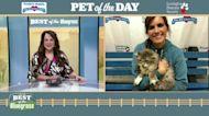 Pet of the Day: Loki