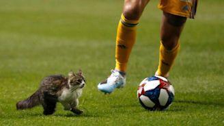 Cat Runs Onto Soccer Field