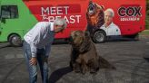 California campaign circus: Newsom rival hits the road with live bear
