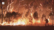 Australia Wildfires Kill One Billion Animals