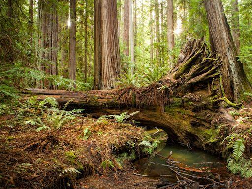 《暗數據》:沒有人在森林裡聽見樹倒了,不代表樹沒發出聲音 - The News Lens 關鍵評論網