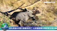 波札那逾400頭大象離奇死亡 心碎畫面曝光專家歎生態災難