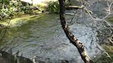 Microsoft grant helps organizations target pollution in Crow Creek