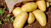 Dalle patate il latte vegetale più sostenibile