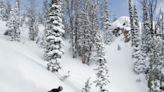 Jackson Hole Tree Stump Prevails as Judge Rules Ski Lawsuit Off Piste