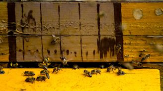 Nearly 40 Percent Of Honey Bee Colonies In The US Were Lost This Winter