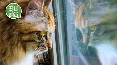 貓行為|貓咪呆望窗外不是想外出 拆解背後四大動機 | 蘋果日報