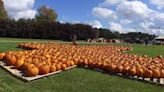 It's not fall without the perfect pumpkin, here's where you can find yours